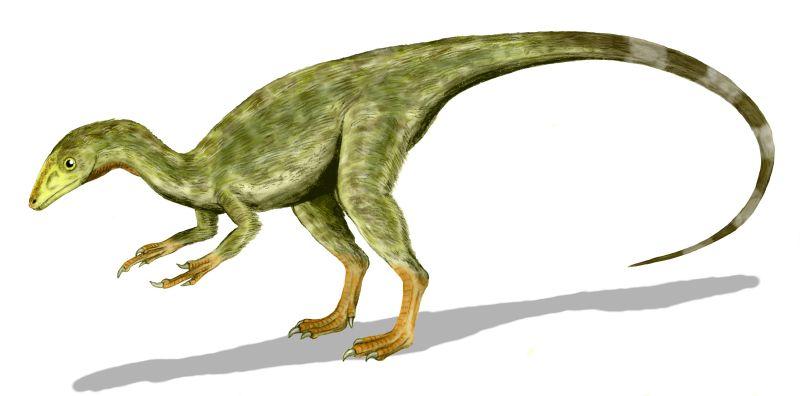 http://www.joergresag.privat.t-online.de/mybk4htm/compsognathus.jpg